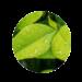 Ecologico-150x150-1